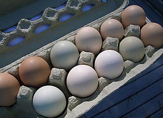 06-12-08-eggs