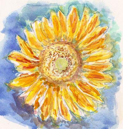 Noriko-sunflower-crop