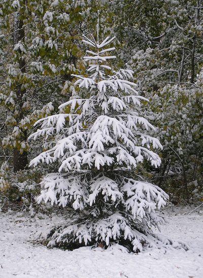 10-16-first-snow-01