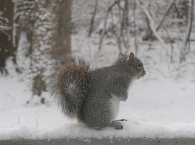 Squirrel-watching-does-12-09