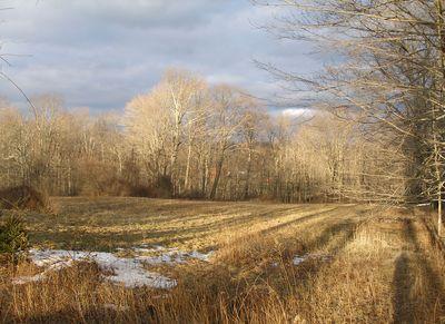 Field-on-brushhill-light-01w
