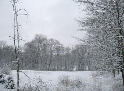 Field-on-brushhill-light-snow-01w