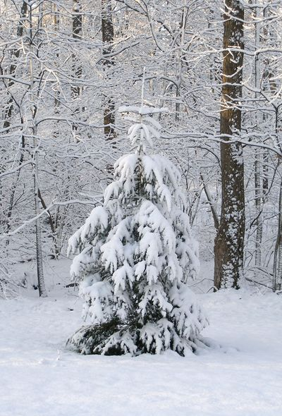Dec-snow-12-6-09