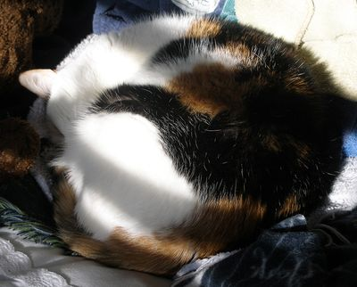 Katie-curled-in-sun