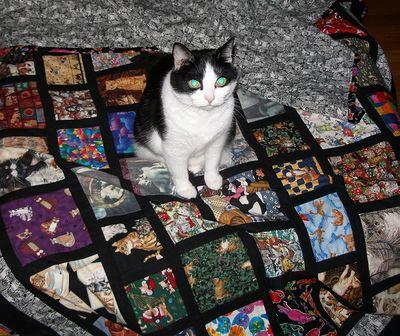 Maggie-on-cat-quilt
