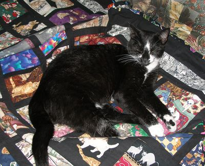 Breezy-on-cat-quilt