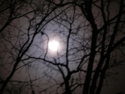 Full moon nov 21-10w