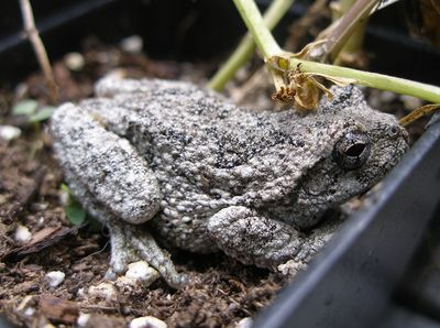 Frog-surprise-1