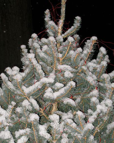 2010-tree-1