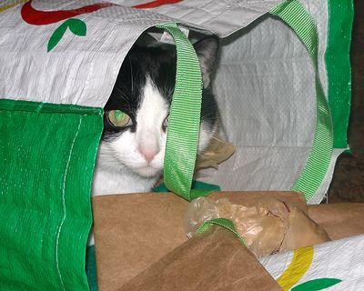 Maggie-in-bag-01