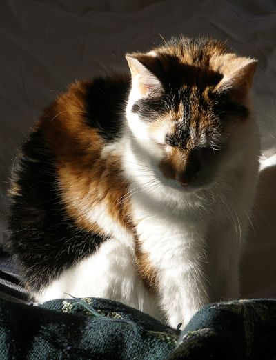 ~Katie-12-2011-bed-sun-01cw
