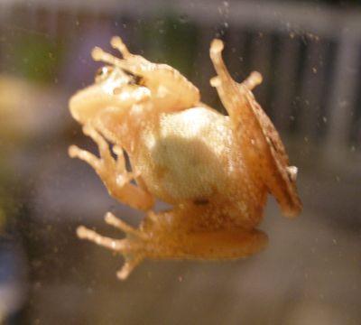 Frog-on-door-01