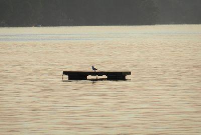 Waramug-beachhouse-lone-bird-01