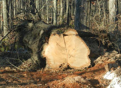 Tree blocking brush hill trunk