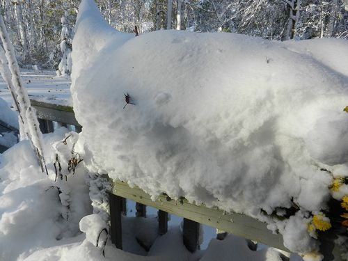 Snow-shelf-by-door-01