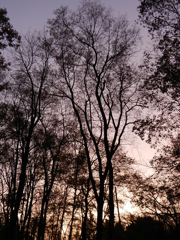 Sunset-8 years
