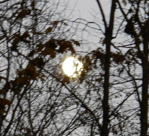 Moon-nest-01