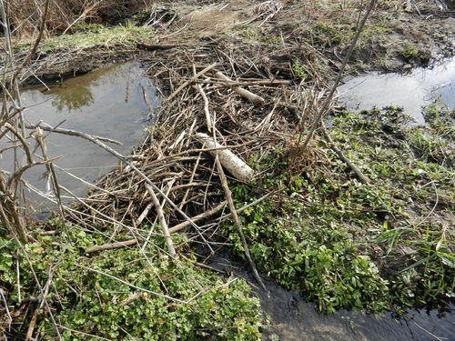 Wmnp-beaver-dam-01