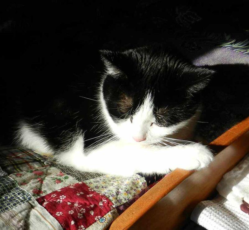 Maggie-in-sunshine--01