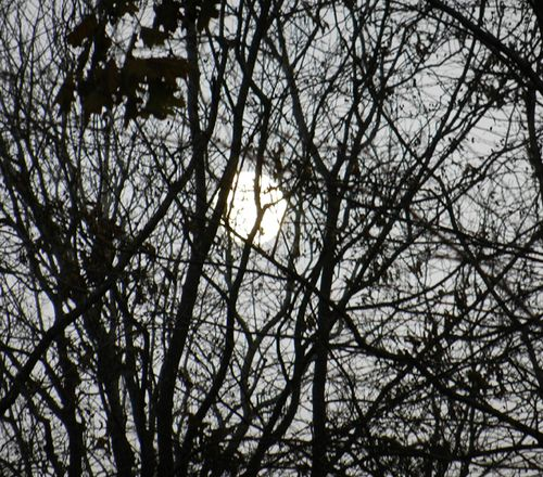 Moon-tree-01
