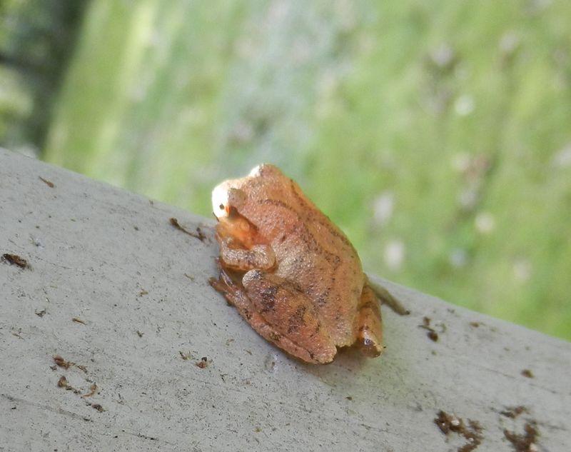 2011-sept-frog-on-deck