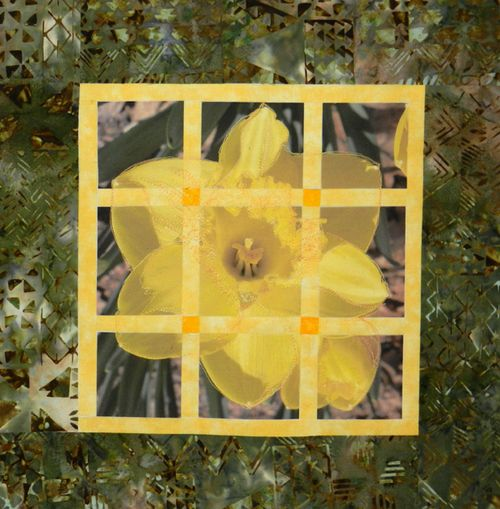 Daffodil-photo-block