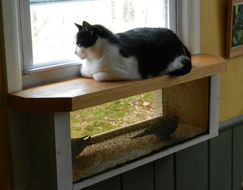 Bird-window-w-Maggie