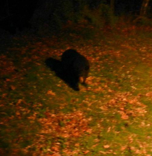 Bear-cub-02