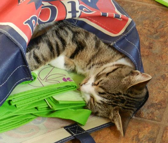Sammy-in-the-bag