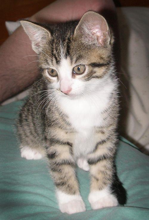 2011-May-Sammy