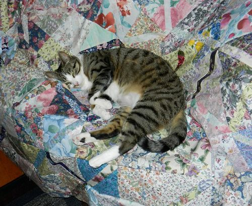 Sammy-on-spring-quilt-01