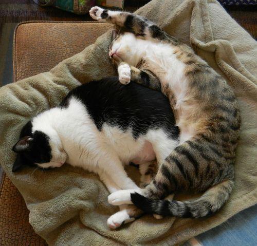 Maggie&sam-sleeping-together-w