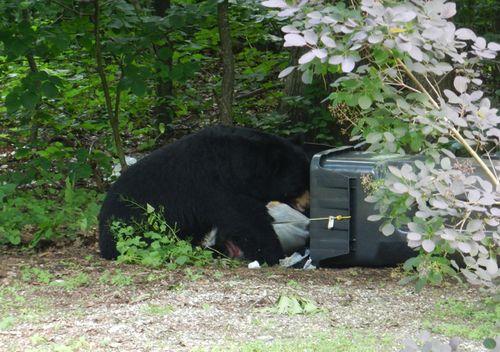 Our-bear--02