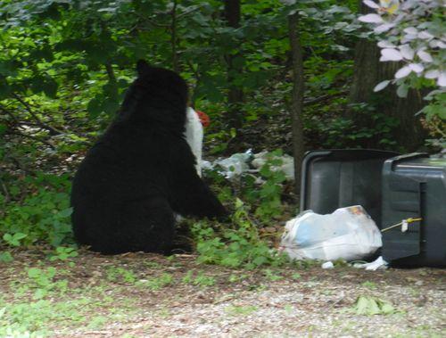 Our-bear--01