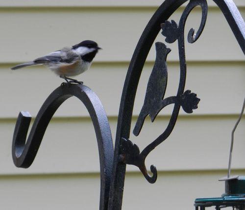 Chickadee-on-feeder-01