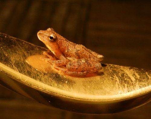 Door-handle-frog-03w