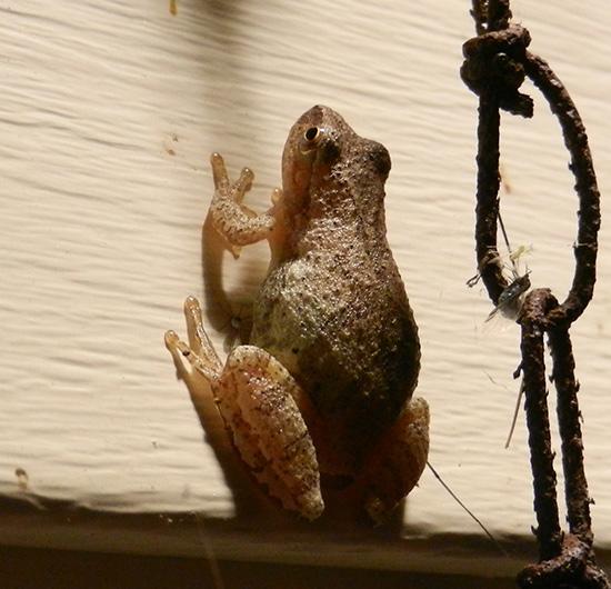 Frog-wall-01