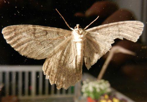 Moth-03