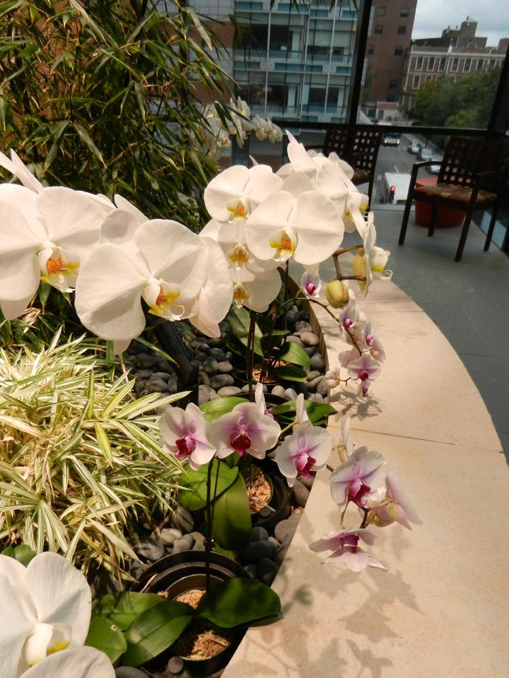 DanaFarber-orchids-03