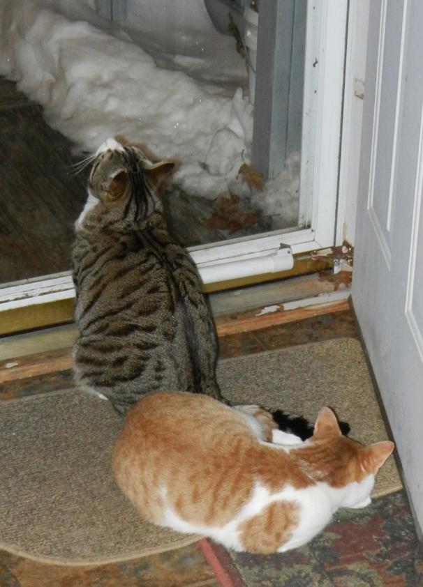 Sammy&Charlie-bk-door-01