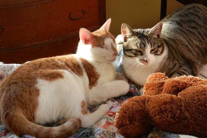 Sammy&Charlie-bed-02-jan13