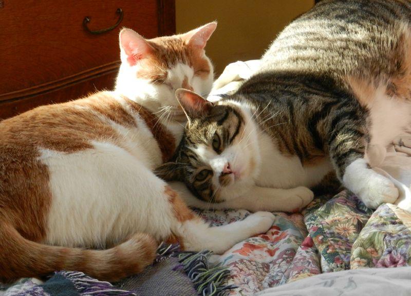 Sammy&Charlie-bed-01-jan13