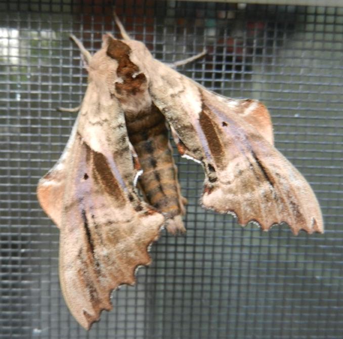 Moth-01