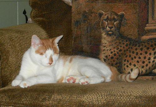 Charlie-cheeta-pillow-01w