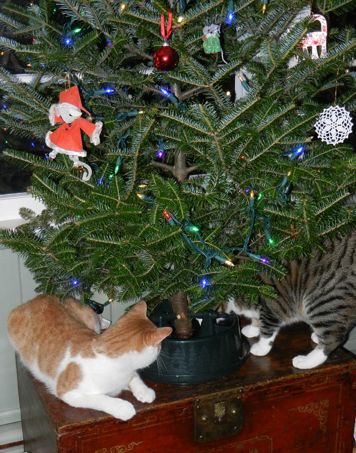 Charlie&Sam&tree-01